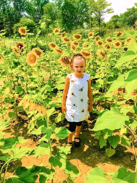 Sunflowers of Sanborn